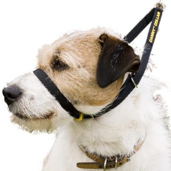 canny-training-collar-jack