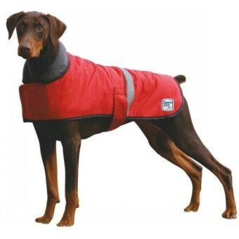 dapper-dog-coat