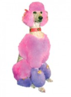 Dyex – Colour for Canines-4