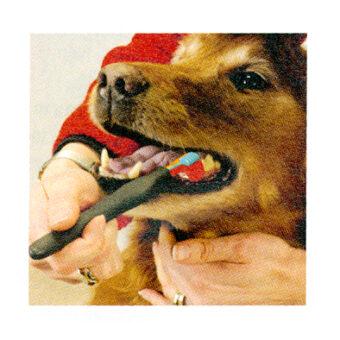 Triple-Pet-EZDOG-toothbrush-2