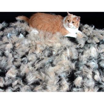 FURminator-cat
