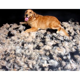 FURminator-dog