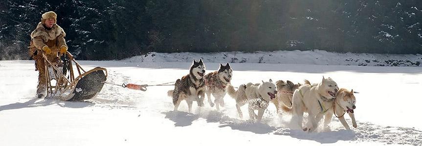 The Mechanics of Sled Dog Racing