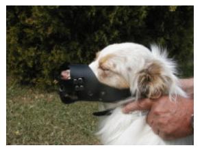 Leather Dog Muzzles-1