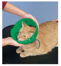 Soft Claws Elizabethan Collar For Cats (and small dogs)