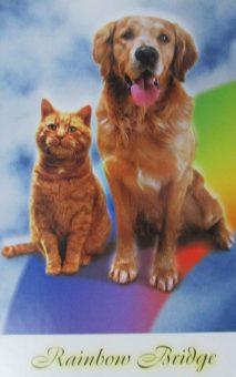 postcard-1-dog-and-cat-rainbow