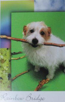 postcard-2-stick-rainbow