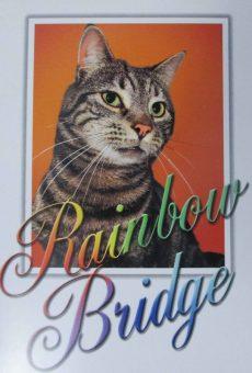 postcard-3-cat-rainbow