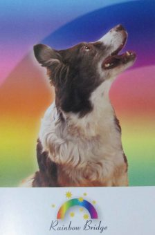 postcard-4-rainbow-dog