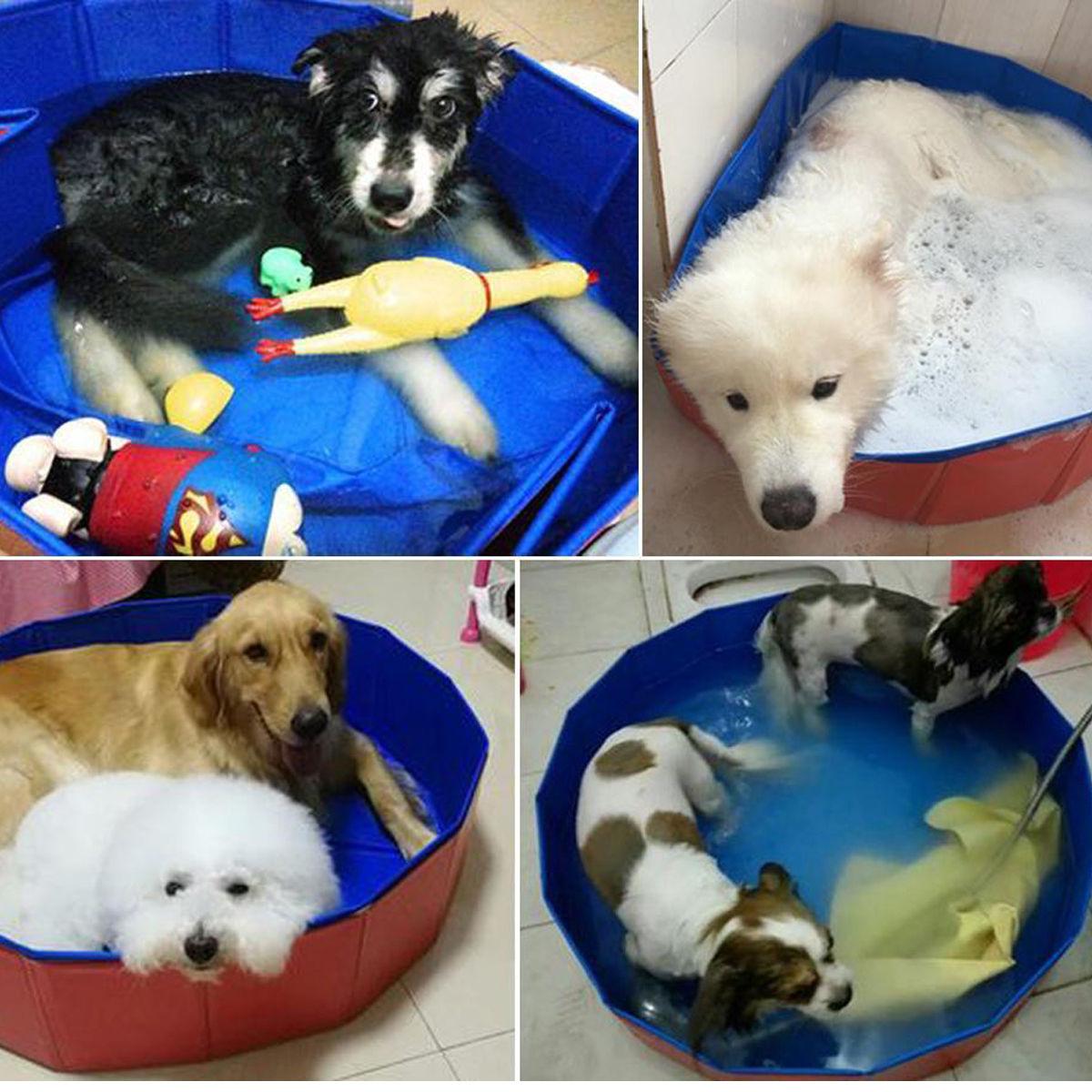 Dog Grooming Bath Australia
