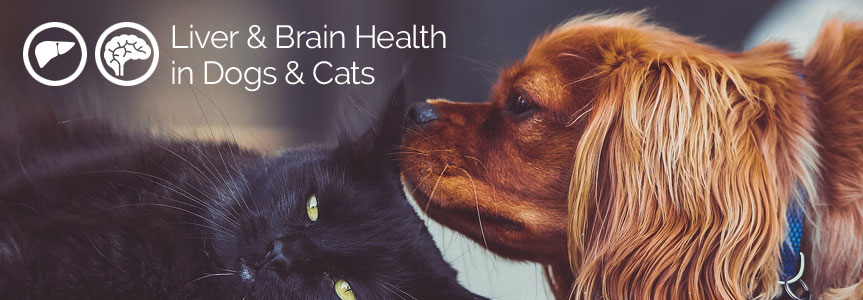 Liver and Brain Health for Dogs and Cats